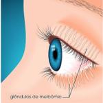 glandulas-meibomio-IMO